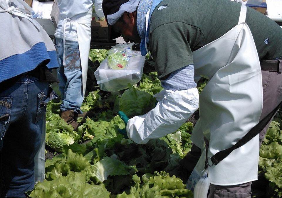 Diversificará Guanajuato en 2020 sus exportaciones agroalimentarias en Emiratos Árabes, Japón y Europa