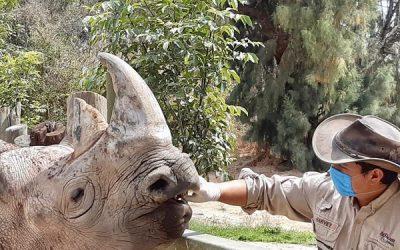 Los zoológicos, criaderos y acuarios de México intensifican acciones para proteger del COVID-19 a miles de personas y animales