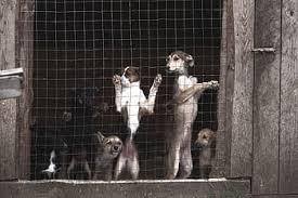 Rescataron a 18 perritos maltratados de una vivienda en Iztacalco