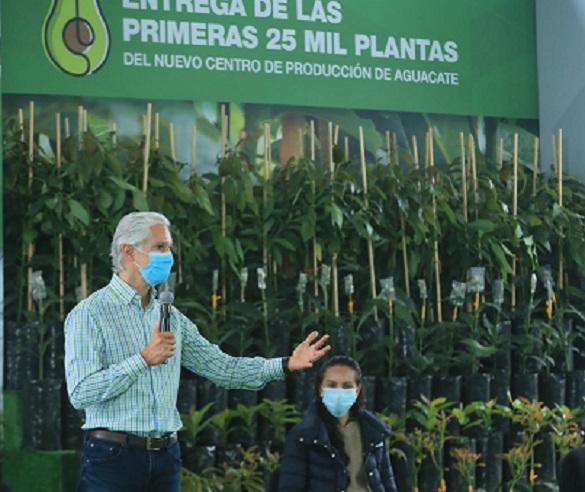 ENTREGA 25 MIL PLANTAS DE AGUACATE DEL NUEVO CENTRO DE PRODUCCIÓN DEL EDOMÉX