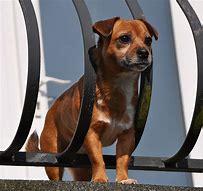 Sismos en México: cuáles son las medidas de protección para mascotas