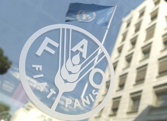 FAO llama a entregar fondos para apoyar a Haití luego del terremoto y la tormenta Tropical Grace